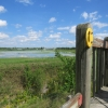 Birding Open Houses at Almonte Lagoons Observation Tower