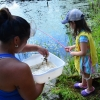 Calling all naturalists to share a sense of wonder: Festival of the Wild Child