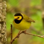 """Back by popular demand: Point Pelee """"Festival of Birds"""""""