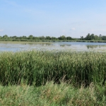 September Birding Open Houses at the new MVFN Mike McPhail Bird Viewing Shelter