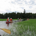Local wild rice beds? Citizen scientists help requested
