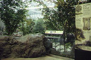 Photo credit: Montreal Biodome website