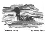 Common Loon by Mary Beth