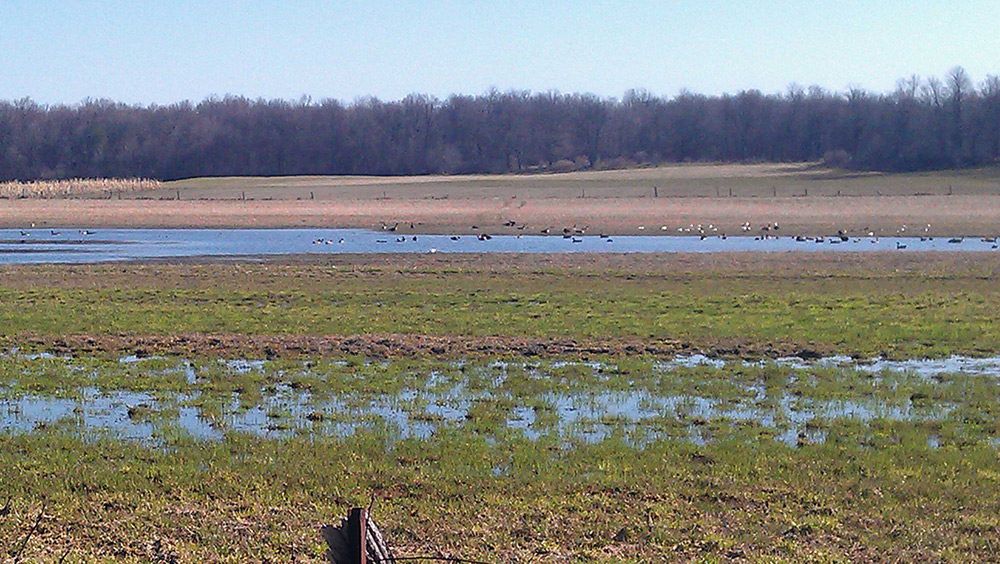 Flooded-Fields-of-Geese-Ducks-and-Gulls-Small
