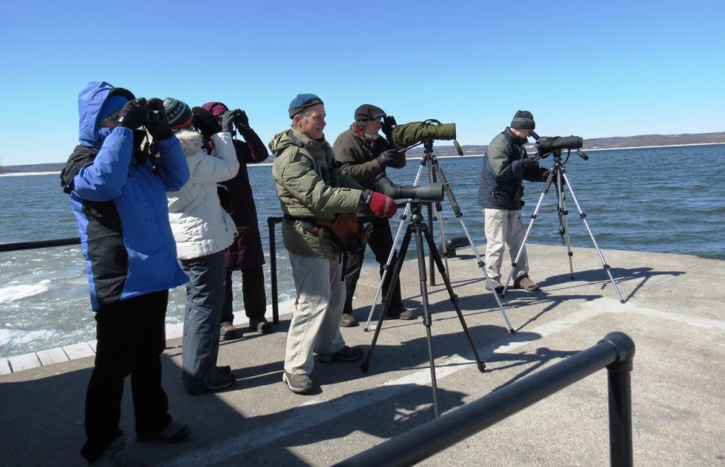 Viewing group at government dock, Presqu'ile. Photo Howard Robinson