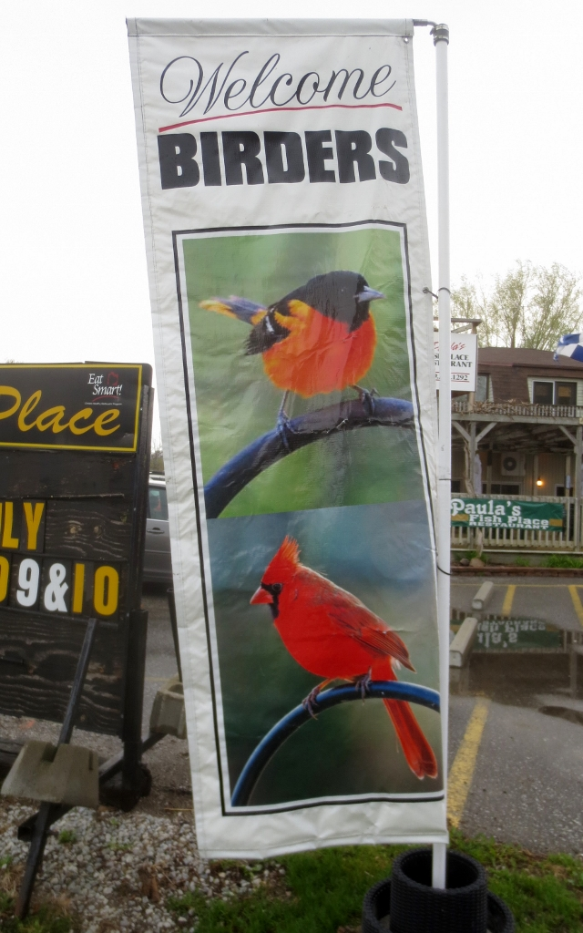 The biggest and brightest bird sightings were at Leamington on the welcome banner in front of Paula's Fish Place where the group had supper.  photo by Neil Carleton