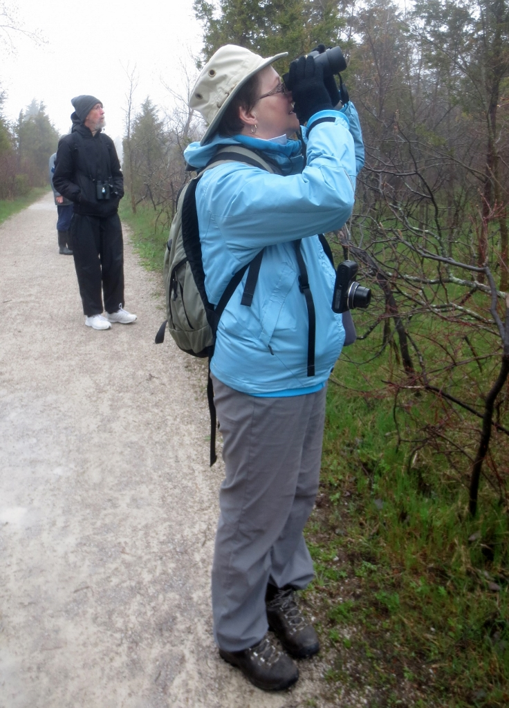 """I see it, look, it's a Red-Headed Woodpecker.""  Point Pelee National Park.  photo by Neil Carleton"