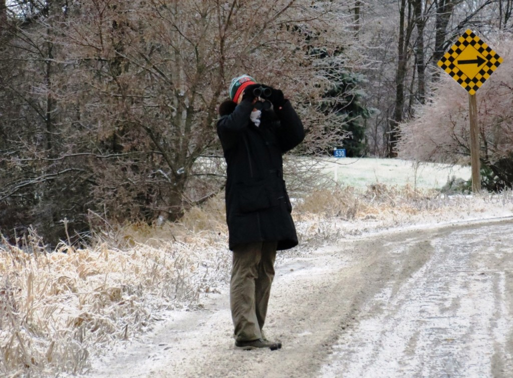 "Mary Robinson scans for birds from Drummond Road during the CP Christmas bird count. ""It was tough day for photos with all the freezing mist. Many birds were sheltering in trees and shrubs."" Photo by Howard Robinson."