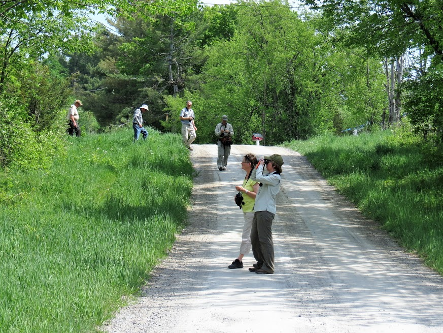 Birdwatching on Porter Road. photo Howard Robinson