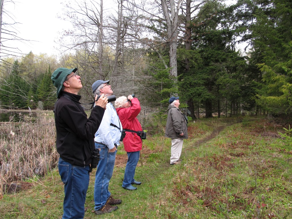 Warblers and wildflowers watchers on Wolf Grove